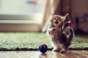 给猫咪拍照的技巧